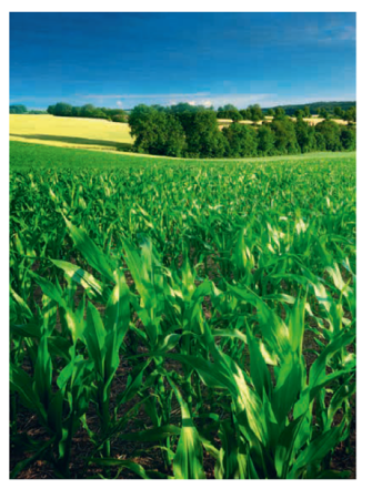 Urea-ES - Increased yield and better crop quality